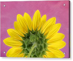 Acrylic Print featuring the photograph Sunflower On Pink - Botanical Art By Debi Dalio by Debi Dalio