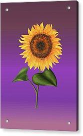 Sunflower On Purple Acrylic Print