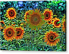 Sunflower Vibrance Acrylic Print