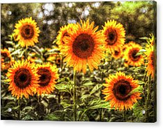 Sunflowers With Canvas Texture Acrylic Print