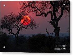Sunrise In The African Savanna Kruger Acrylic Print