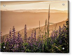 Sunset Among The Lupine Acrylic Print