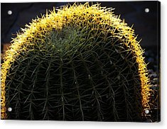 Sunset Cactus Acrylic Print