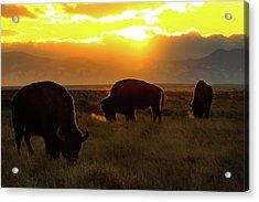 Sunset On The Plains Of Colorado Acrylic Print