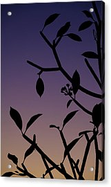 Acrylic Print featuring the photograph Sunset Silhouette by Nicole Young