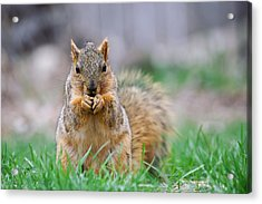 Super Cute Fox Squirrel Acrylic Print