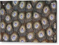 Surface Of Coral Acrylic Print