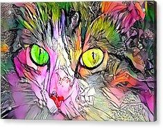 Surreal Cat Wild Eyes Acrylic Print