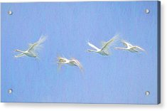 Swan Art Panorama  Acrylic Print