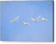 Swans Flying Art  Acrylic Print