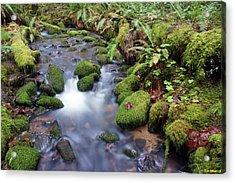 Acrylic Print featuring the photograph Sweet Sounds At The Creek by Ben Upham