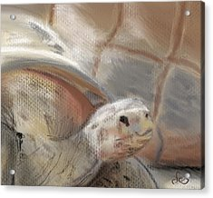 Acrylic Print featuring the digital art Sweet Tortoise by Fe Jones