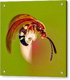 Swirly Wasp Acrylic Print