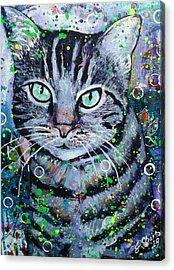 Tabby Cat Acrylic Print by Jennifer Charton