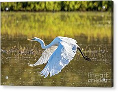Acrylic Print featuring the photograph Take Off by Craig Leaper
