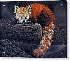 Takeo, The Red Panda Acrylic Print