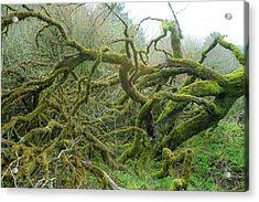 Acrylic Print featuring the photograph Tangled Moss by Mark Duehmig