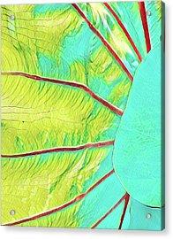 Taro Leaf In Turquoise  Acrylic Print