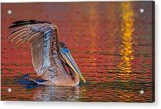 Tchefuncte Pelican Acrylic Print