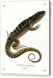 Acrylic Print featuring the drawing Tegu by Philippe Schmid