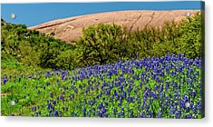 Texas Bluebonnets And Enchanted Rock 2016 Acrylic Print