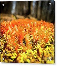 Acrylic Print featuring the photograph Orange Moss 1 by Atousa Raissyan