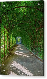 The Alley Of The Ivy Acrylic Print
