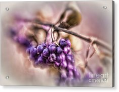The American Beautyberry Acrylic Print