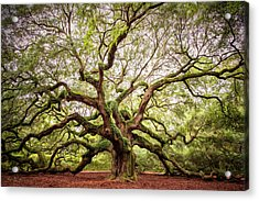 The Angel Oak Acrylic Print