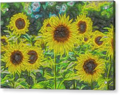 The Art Of The Sunflower Acrylic Print