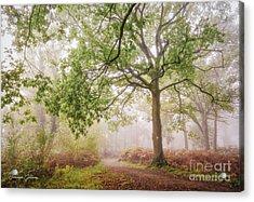 The Autumn Path Acrylic Print