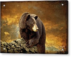 The Bear Went Over The Mountain Acrylic Print