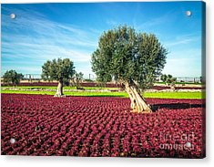 The Beautiful And Colorful Landscapes Acrylic Print
