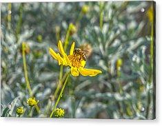 The Bee The Flower Acrylic Print