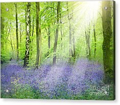 The Bluebell Woods Acrylic Print