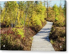 Acrylic Print featuring the photograph The Boardwalk At Mer Bleue. by Rob Huntley