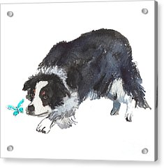 The Collie And Blue Butterfly Acrylic Print