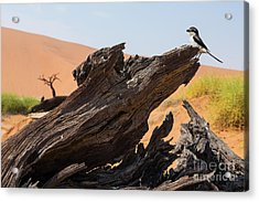 The Desert Landscape Acrylic Print