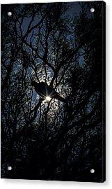 The Enlightened Dove Acrylic Print