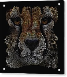 The Face Of A Cheetah Acrylic Print