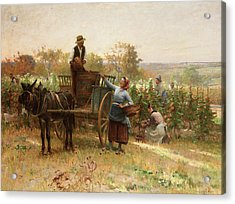 The Grape Harvest Acrylic Print