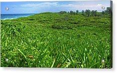 The Green Island Acrylic Print