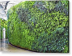 Acrylic Print featuring the photograph Leafy Green Wall by Bill Swartwout Fine Art Photography