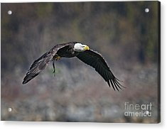 The Hunter Acrylic Print