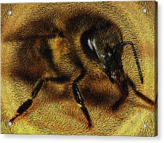 The Killer Bee Acrylic Print