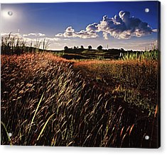 The Last Grassy Field, Trinidad Acrylic Print