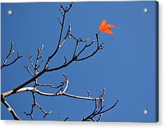 The Last Leaf During Fall Acrylic Print by By Ken Ilio