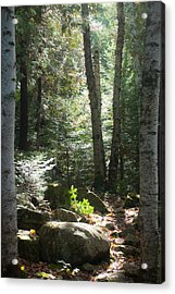 The Living Forest Acrylic Print