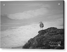 Acrylic Print featuring the photograph The Lone Gull by Jeni Gray