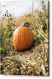 Acrylic Print featuring the photograph The Lone Pumpkin by Whitney Leigh Carlson